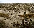 Namib02.jpg