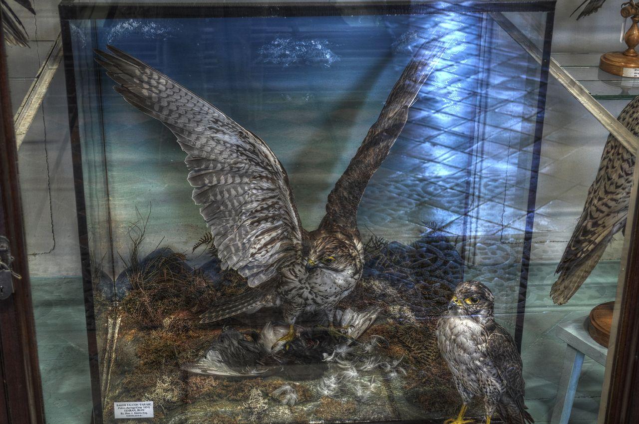Natural Museum History Dublin