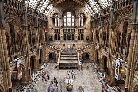 The Main Hall of the Natural History Museum in London, United Kingdom