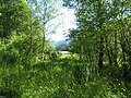 Natural wetland (3254933679).jpg