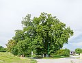 Naturdenkmal MI-082 Kastanienbäume in A-2203 Putzing.jpg