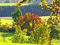 Nature - panoramio (12).jpg