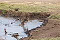 Nature of Ngorongoro Conservation Area (104).jpg