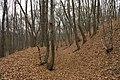 Nature reserve Šance in autumn 2012 (17).JPG