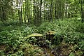 Nature reserve Libouchecké rybníčky in summer 2014 (1).JPG