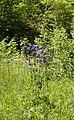 Naturpark Thal cassinam 158.jpg