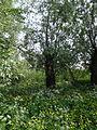 Naturschutzgebiet Heuckenlock 21.05.2014 Phase 21.JPG