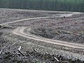 Naver Forest after felling - geograph.org.uk - 158002.jpg