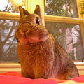 Netherland dwarf rabbit chibi.JPG