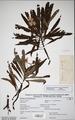 Neuchatel Herbarium Types NEU000113018.tiff