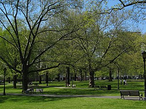 New Haven Green - The upper Green in spring