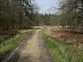 New Forest cycle path - geograph.org.uk - 779473.jpg