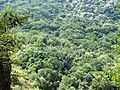 Newlands Indigenous Forest viewed from Table Mountain - Cape Town 2.jpg