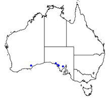 Map of Australia showing reported occurrences of Nothomyrmecia.