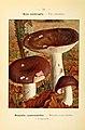 Nouvel atlas de poche des champignons comestibles et vénéneux (Pl. 32) (6459637609).jpg