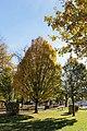 Oberndorf - Stadtpark - Ansicht - 2013 11 08-1.jpg