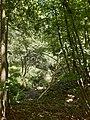 Oberrimbacher Erdfälle 202006 06.jpg