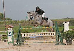 Obstacle saut d 39 obstacles wikip dia - Jeux de poney qui saute ...