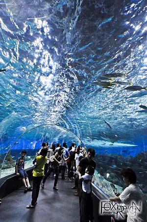 Manila Ocean Park - Tunnel of the Manila Ocean Park' Oceanarium