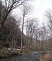 Oisase stream , 奥入瀬渓流 - panoramio (18).jpg