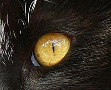 Esope et le Chat dans CHAT 220px-Ojo_de_gata_trim