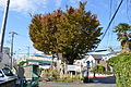 Okeyaki in Ebina, Kanagawa.JPG