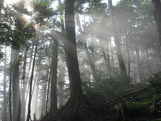 Okutama, Tokyo - A forest in the Okuchichibu Mountains