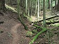 Old Gulch Trail (7846569610).jpg