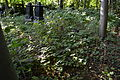 Old cemetery in Küstrin-Kietz 239.JPG