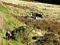 Old shepherd's hut - geograph.org.uk - 601131.jpg