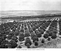 Orchards in Wenatchee Washington in 1920.jpg
