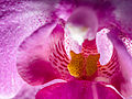 Orchid (14397152213).jpg