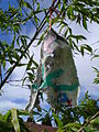Oregon handmade prayer flag on bamboo 2.JPG