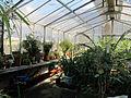 Orto botanico, fi, serretta felci (cicadee) 03.JPG