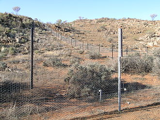 Overgrazing - Overgrazed area, by native fauna in western New South Wales (Australia), in the upper right corner.