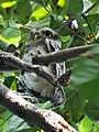 Owl e.jpg