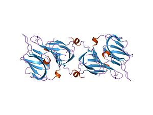Cupin superfamily - crystal structure of protein ylba from E. coli, pfam duf861