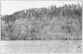 PSM V85 D352 Virginia pine on rocky bluffs along warrior river.png