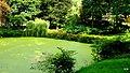 Pałacowy park - panoramio (13).jpg