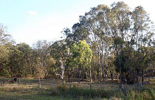 Perseverance, Queensland Suburb of Toowoomba Region, Queensland, Australia