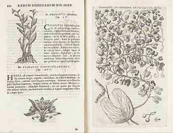 Pages from Hernandez's 'Rerum...' showing plants Wellcome L0042687.jpg