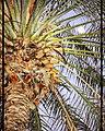 Palm in moonlight.jpg