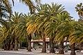Palm tree alley.jpg