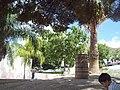 Palmas en la antigua hacienda de perote, Parras Coahuila - panoramio.jpg