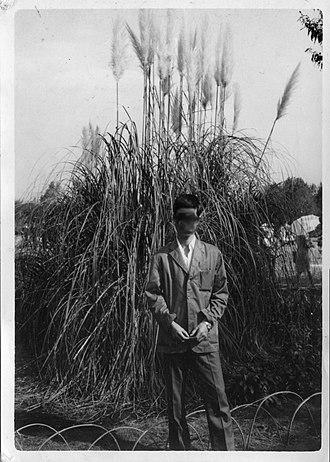 Cortaderia selloana - Pampas grass in Jindai Botanical Garden, autumn 1964