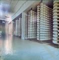 Pannello fotografico lavorazione Parmigiano-Reggiano (1 di 6) - Musei del cibo - Parmigiano - 215.tif