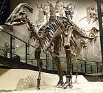 Parasaurolophus cyrtocristatus 1 salt lake city.jpg