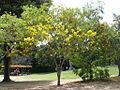 Parque del Este 2012 014.JPG