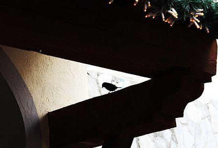 Huose Sparrow, Breui-Cervinia, ITA
