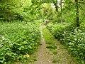 Path inside Bunny Old Wood - geograph.org.uk - 1335533.jpg